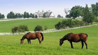 Horse Property and Farms FL Real Estate