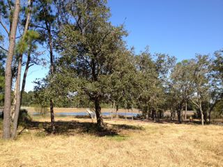 1329 River Road for sale on Johns Island