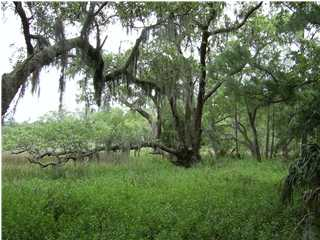Lot at 209 Marsh Grive, Mount Pleasant, SC